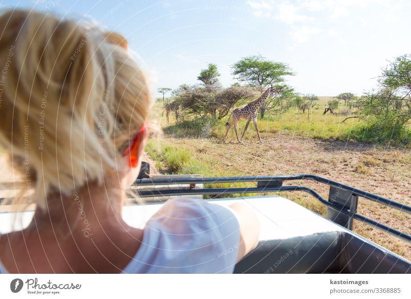 Frau auf afrikanischer Wildsafari beobachtet Giraffe Freude schön Freizeit & Hobby Ferien & Urlaub & Reisen Tourismus Ausflug Abenteuer Safari Erwachsene Natur