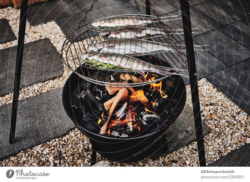 Grillforelle Fisch Essen Vegetarische Ernährung Camping Sommer Garten Umwelt Natur Wasser Teich Stein Holz Rauch Diät drehen Duft Erholung fangen genießen