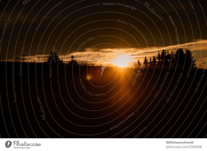 Sonnenuntergang Landschaft Himmel Wolken Sonnenaufgang Sonnenlicht Wärme Baum Feld Hügel fantastisch Unendlichkeit natürlich positiv schön braun orange schwarz