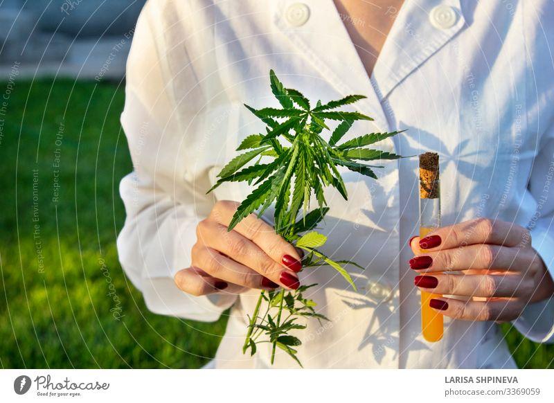Arzt mit Cannabiszweig, Reagenzglas Kräuter & Gewürze Medikament Erholung Wissenschaften Labor Prüfung & Examen Hand Natur Pflanze Blatt natürlich grün Hanf