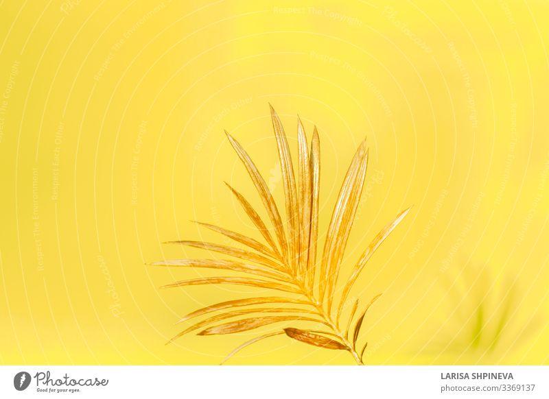 Goldenes Palmenblatt auf gelbem Hintergrund. elegant Stil Design exotisch schön Sommer Dekoration & Verzierung Tapete Büro Natur Pflanze Baum Blume Blatt Urwald