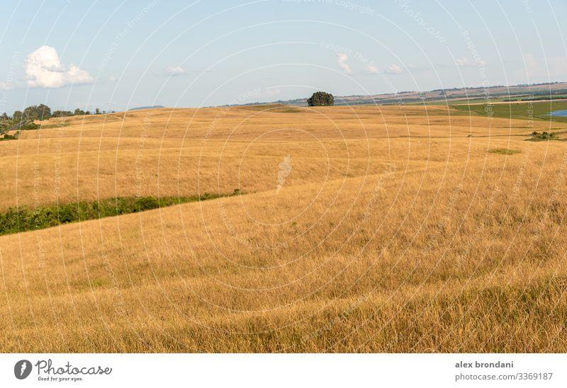 Agropastorale Landschaft im Süden Brasiliens an der Grenze zu Uruguay1 Ackerbau Tier Rindfleisch blau bovin Brasilianer Rassenmischung Zucht braun Wade Pflege