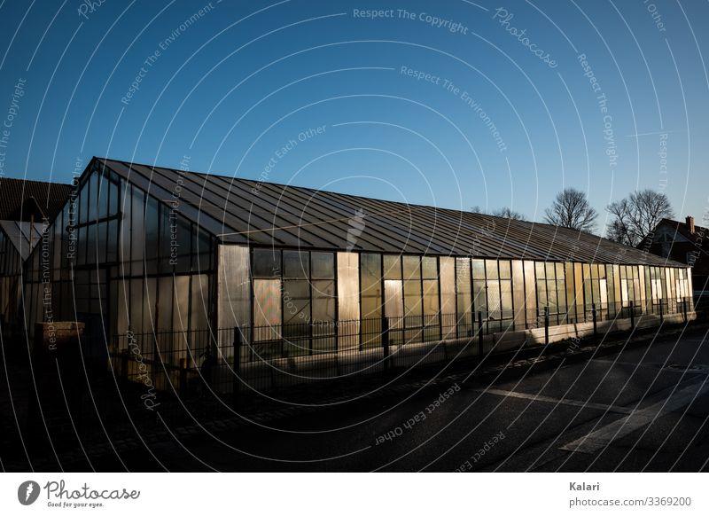 Großes Gewächshaus im Sonnenlicht am Abend gewächshaus ackerbau gemüseanbau bauernhof gärtner landwirtschaft gartenjahr groß kleinbauer frühjahr frühbeet sonne