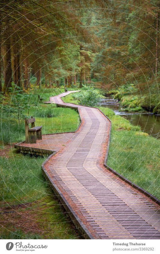 Hafren-Wald-Pfad Tourismus Abenteuer Wege & Pfade dunkel Llanidloes Mittelwales Wales neben dem Strom antiker Markt schöner Weg Bank ruhiger Wald Pfad folgen