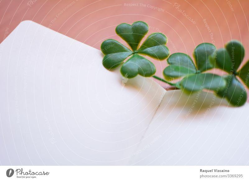 Kleeblätter auf einem leeren Notizbuch. Natur Pflanze Papier schreiben grün weiß Notebook Kleeblatt vereinzelt Glück patrick Iren Republik Irland vier glücklich