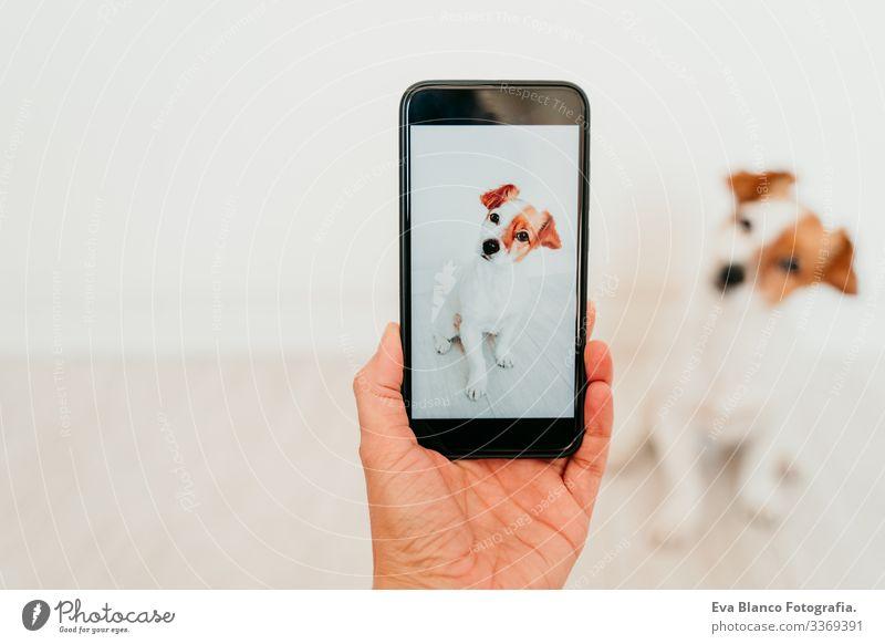Unkenntliche Frau, die mit dem Handy ein Foto von dem süßen Hund Jack Russell zu Hause macht. Technologie und Haustier-Konzept jack russell Bild Bildschirm