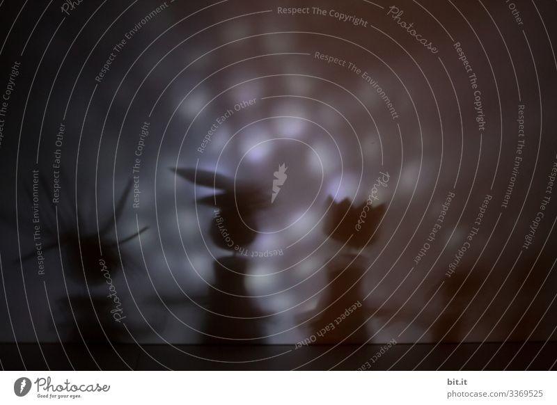 Photochallenge 2020 I Verschwörungstheorien schwarz auf weiß skurril Kreativität Phantasie Traumwelt Märchen Phantasiewelt Silhouette Schattenspiel
