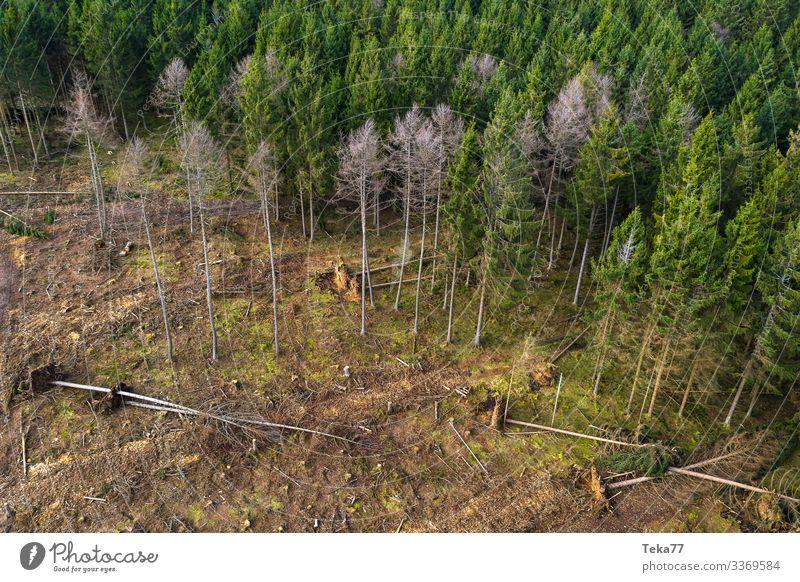 #Nadelwald mit Sturmschäden 2 Winter Umwelt Natur Landschaft Wald ästhetisch Sturmschaden Orkan Orkan Kyrill Farbfoto Außenaufnahme Luftaufnahme