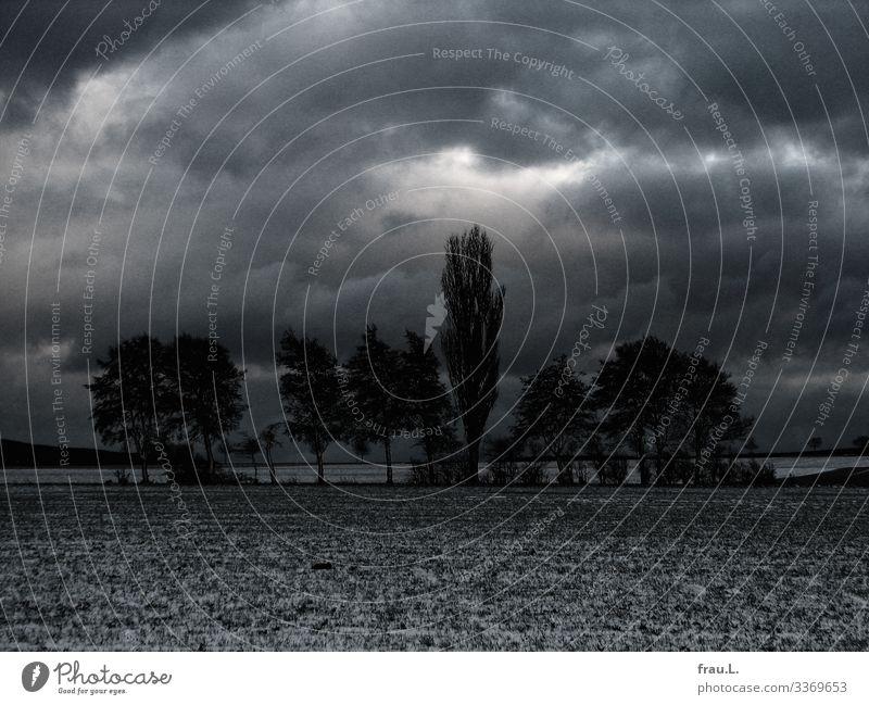 Baumgruppe Umwelt Natur Landschaft Pflanze Schnee Feld dunkel schön Degersen Wolken Winter Traurigkeit Heimat Farbfoto Außenaufnahme Tag Dämmerung Totale