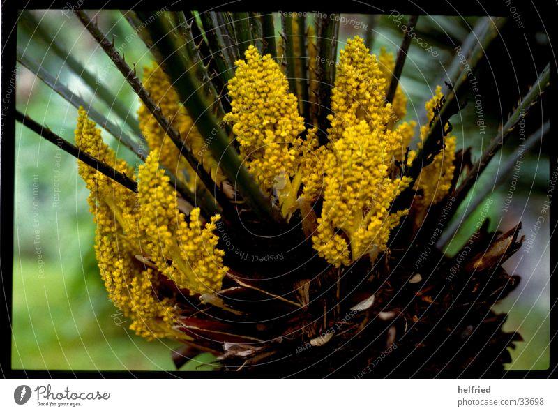 agave Natur Blüte Frühling Garten Park Agave