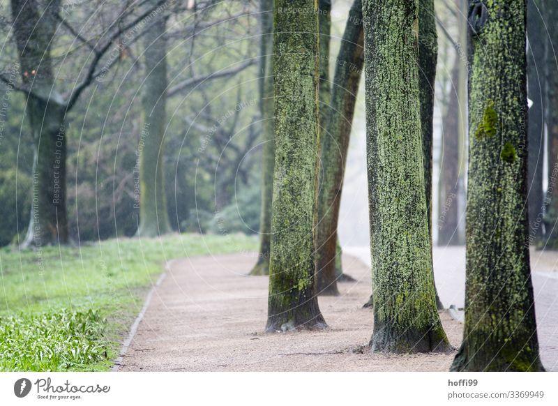 neblige Parklandschaft mit nassen moosigen Baumstämmen und Weg Natur Landschaft Frühling schlechtes Wetter Nebel Regen Gras Wege & Pfade ästhetisch authentisch