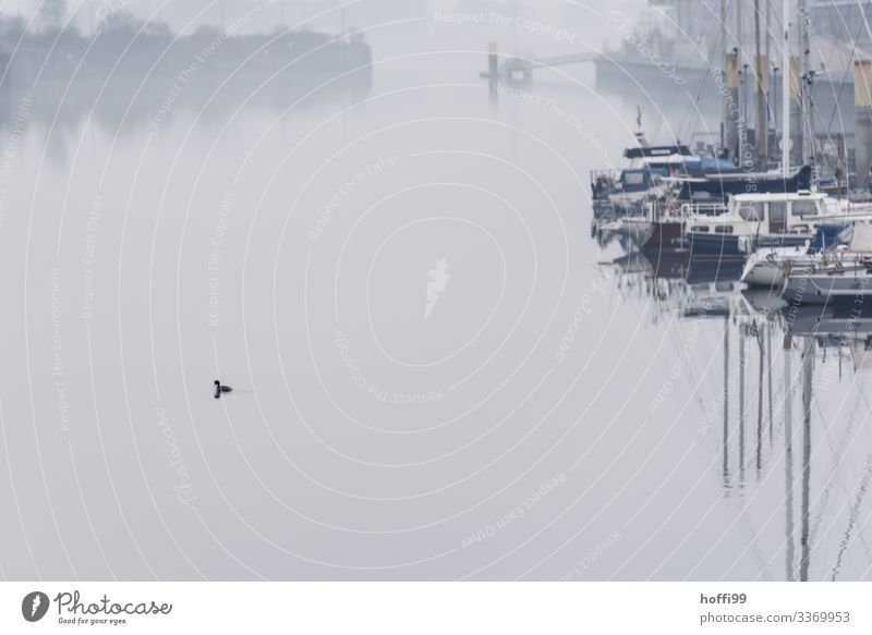 alles ist ruhig Segeln Natur Wasser Herbst Winter schlechtes Wetter Nebel Küste Flussufer Bucht Hafen Hafeneinfahrt Steg Anlegestelle Schifffahrt Sportboot