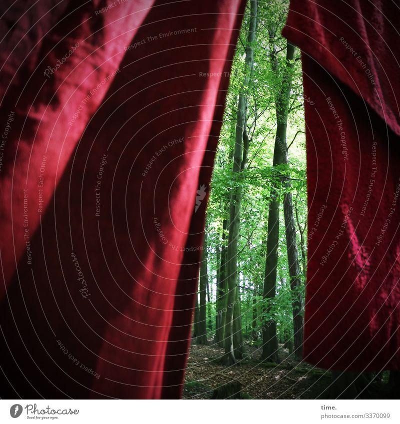 healthy forest final curtain Sonnenlicht Schatten Außenaufnahme Farbfoto Irritation skurril Rätsel Kreativität komplex Inspiration Idee Überraschung hängen Wald