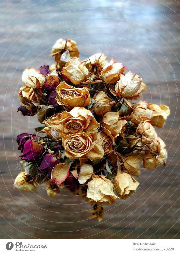 Rosenstrauß weiße und rote Rosen getrocknet Basteln Wohnung Innenarchitektur Dekoration & Verzierung Blumenstrauß Kunstwerk ästhetisch elegant trocken gelb gold