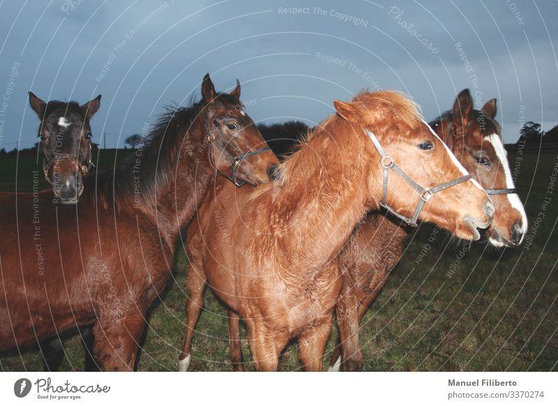 die Jugend... Reiten Tier Wiese Feld Nutztier Pferd 4 elegant Freundlichkeit lustig blau braun gelb weiß Zufriedenheit Tierliebe Nervosität verstört Beginn