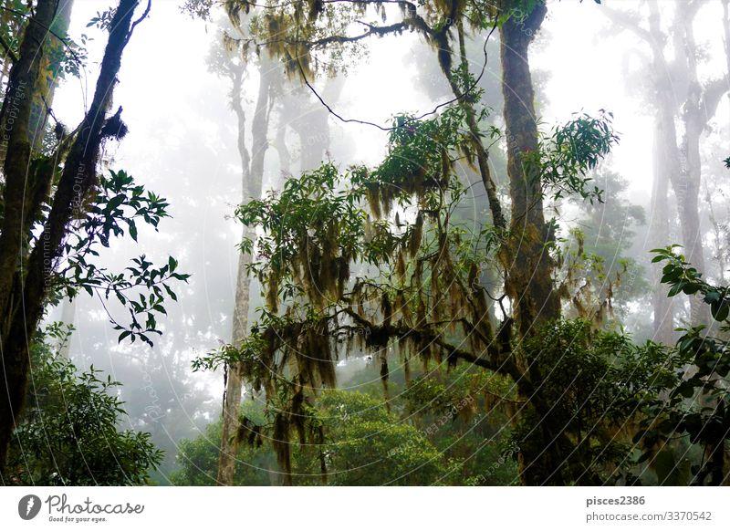 Mysterious foggy forest in Los Quetzales National Park Natur Nationalitäten u. Ethnien Rippen Feldrand Misthaufen