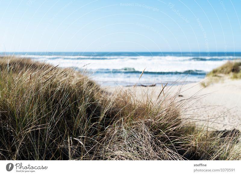 Duenengras mit Meer im Hintergrund Natur Landschaft Schönes Wetter Düne Stranddüne Sand Ferien & Urlaub & Reisen Dünengras Oregon Gedeckte Farben Außenaufnahme