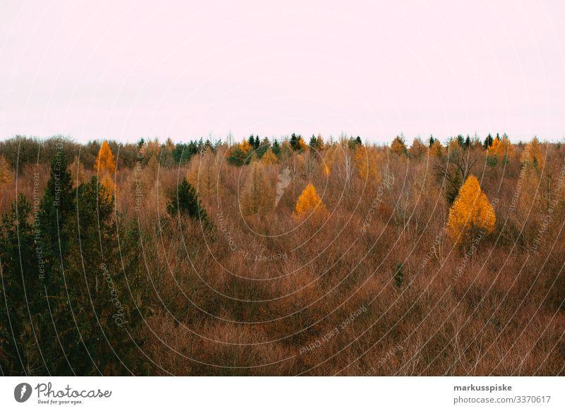 Herbstlicher Wald herbstlich Herbstfärbung Herbstfarben Baumwipfelpfad Baumspitzen Laubwald Laubbaum Nutzwald