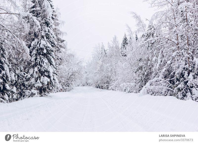 Verschneite Strasse im winterlichen Frostwald schön Ferien & Urlaub & Reisen Winter Schnee Natur Landschaft Himmel Wetter Schneefall Baum Park Wald Straße