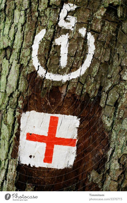 Gedanken kommen und gehen... Baum Baumstamm Rinde Markierung Hinweis Wegzeichen Kreuz weiß rot Orientierung Natur Wald