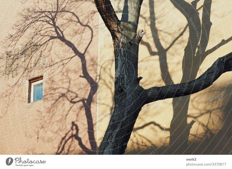 Kleines Fenster Baum Baumstamm Baumschatten Ast Berlin-Mitte Hauptstadt bevölkert Haus Gebäude Mauer Wand Fassade oben Farbfoto Außenaufnahme Detailaufnahme