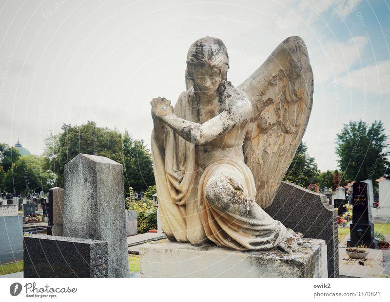 Trauriger Engel feminin androgyn 1 Mensch Skulptur Himmel Wolken Schönes Wetter Baum Flügel Friedhof Zentralfriedhof Sandstein Grab Grabstein Stein sitzen alt