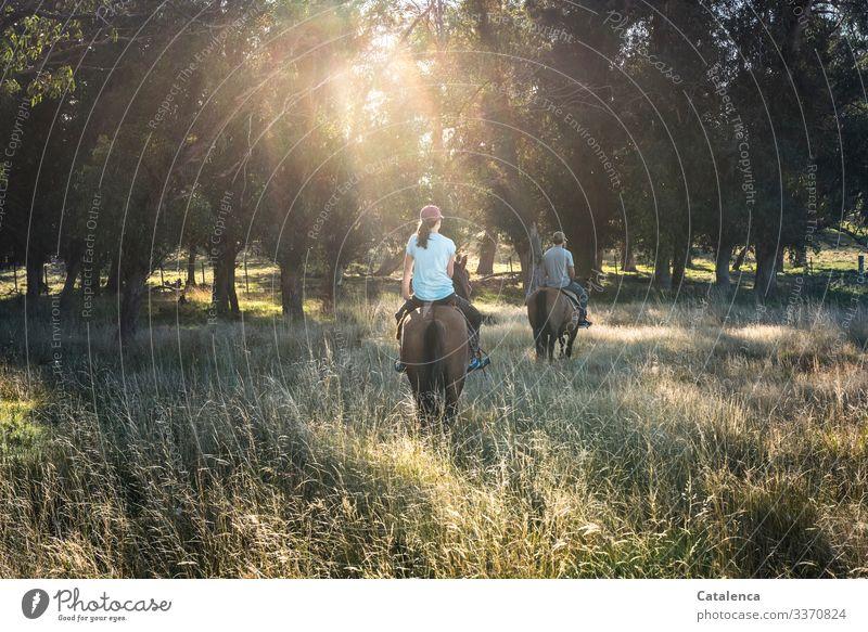 Zwei Reiter am frühen Morgen im Sonnenlicht und hohem Gras Tier Pferde Braun Grün Umwelt draußen Himmel Natur Sommer Wiese Pampa Baum Grasland Pflanze