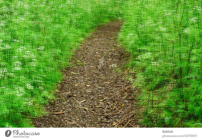 Traumpfad Natur Landschaft Garten außergewöhnlich braun grün Wege & Pfade Fußweg fantastisch Wiesenkerbel Pflanze Doppelbelichtung Esoterik gekrümmt Frühling