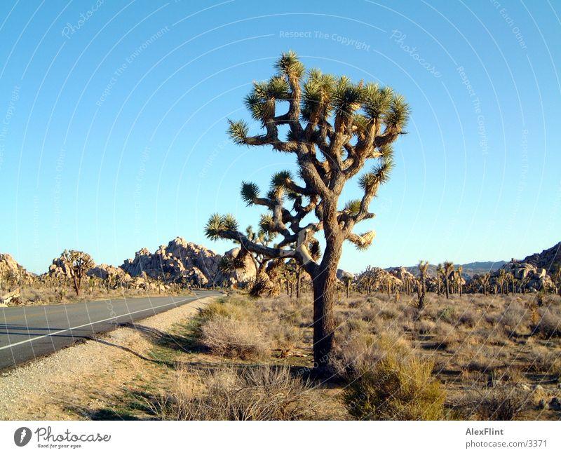 wild wild west3 Ferien & Urlaub & Reisen USA Denkmal
