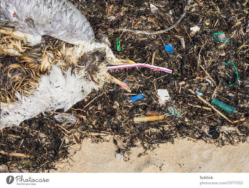 Tod durch Plastikmüll Strand Meer Umwelt Natur Tier Küste Wildtier Totes Tier Vogel Möwe 1 Kunststoffverpackung dreckig Ekel gruselig hässlich trist