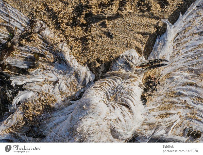 Beifang Küste Tier Wildtier Totes Tier Möwe 1 Sand Ekel gruselig maritim trist braun schwarz weiß Fischereiwirtschaft Vogel Feder Strand Tod Angelschnur