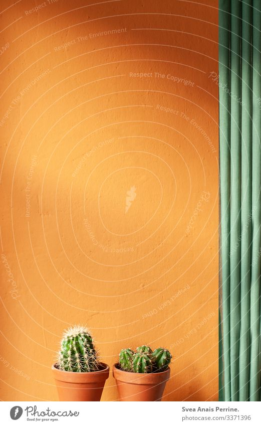 Indirektes Licht Lifestyle elegant Stil Design Pflanze Kaktus Architektur Mauer Wand Blumentopf Tontopf Wärme grün orange Häusliches Leben Innenaufnahme