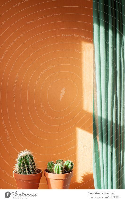 direkte Sonne Design Sommer Pflanze Kaktus Mauer Wand Gardine Blumentopf Tontopf grün orange Innenarchitektur Häusliches Leben Farbfoto Innenaufnahme