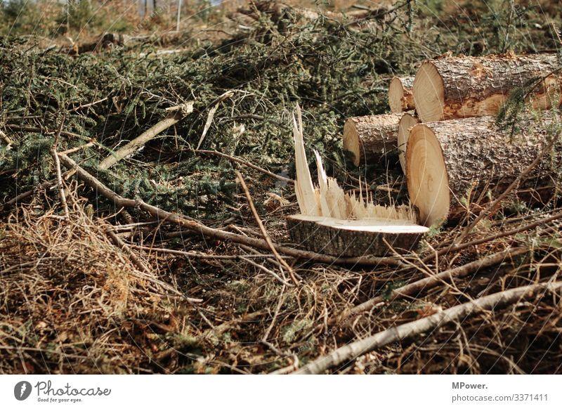 gehackt Natur unten Baum gefallen Wald Waldboden Abholzung Forstwald Fichtenwald Sturmschaden Holz Forstwirtschaft Baumstamm Umweltschutz Borkenkäfer Farbfoto
