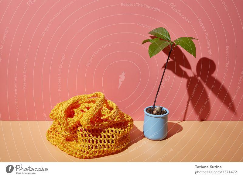 Avocadosprossen und Schnurbeutel auf farbigem Eck-Hintergrund Lebensmittel Getränk Lifestyle kaufen Stil Ferien & Urlaub & Reisen Sommer Frau Erwachsene Mode