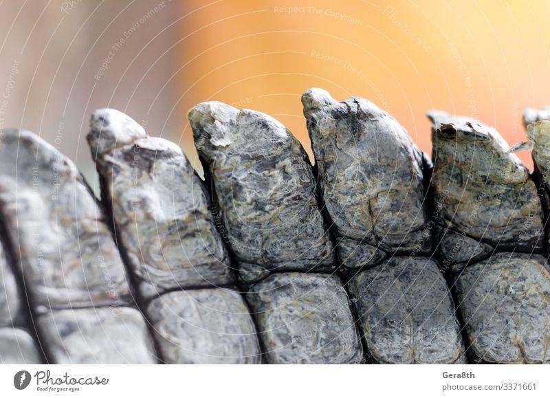 Alligator-Krokodil-Haut im Detail Nahaufnahme Natur Tier natürlich braun Farbe Alligatorenhaut Hintergrund schließen Krokodilhaut detailliert Faltenwurf live