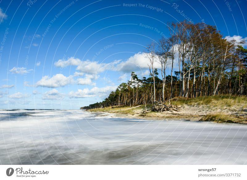 Stürmische See am Küstenwald des Darßer Weststrand Natur Landschaft Pflanze Erde Luft Wasser Himmel Wolken Herbst Schönes Wetter Wind Sturm Baum Gras Wellen