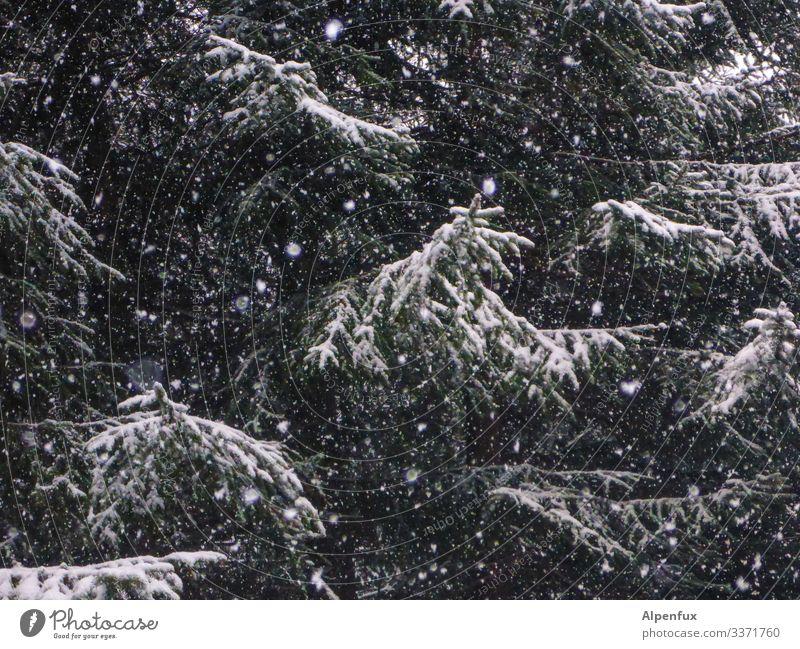 ich bin vor willma geflüchtet | Eiszeit Natur Baum Wald Winter dunkel Umwelt kalt Schnee Schneefall träumen Coolness Klima bedrohlich geheimnisvoll Irritation