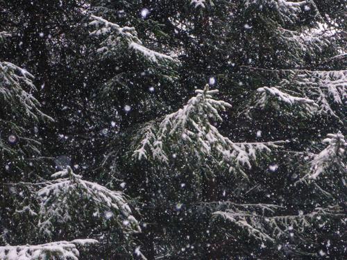 ich bin vor willma geflüchtet | Eiszeit Umwelt Natur Winter Klima schlechtes Wetter Schnee Schneefall Baum Wildpflanze Wald Coolness dunkel kalt bizarr