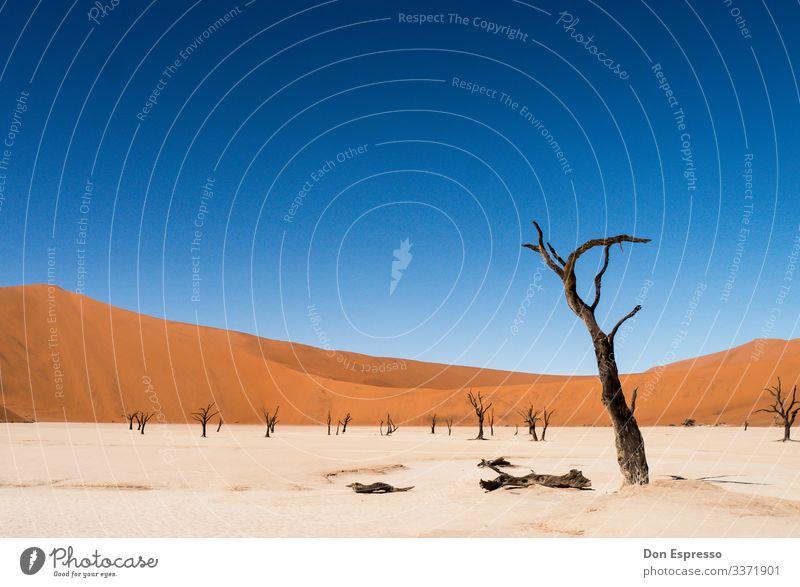 Hidden Vlei Natur Landschaft Sand Klima Klimawandel Baum Wüste verblüht dehydrieren trist trocken Ferien & Urlaub & Reisen Surrealismus Vergänglichkeit Zeit