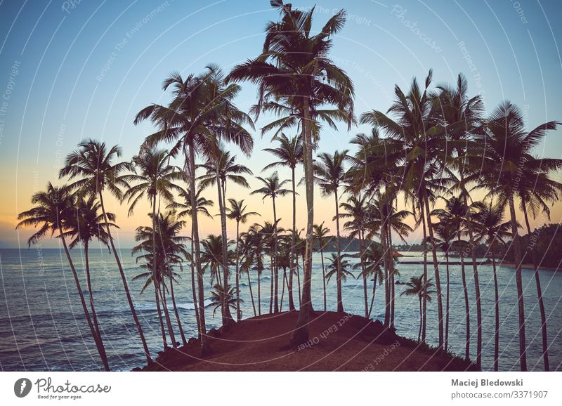 Tropischer Strand mit Kokosnusspalmen bei Sonnenaufgang. Erholung Ferien & Urlaub & Reisen Sommer Sommerurlaub Meer Insel Natur Landschaft Himmel Baum Hügel