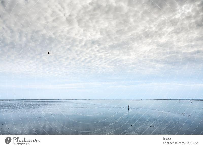 Dein Leben Ferien & Urlaub & Reisen Ferne Freiheit Strand Meer wandern 1 Mensch Natur Landschaft Luft Wasser Himmel Horizont Vogel Tier gehen Unendlichkeit kalt