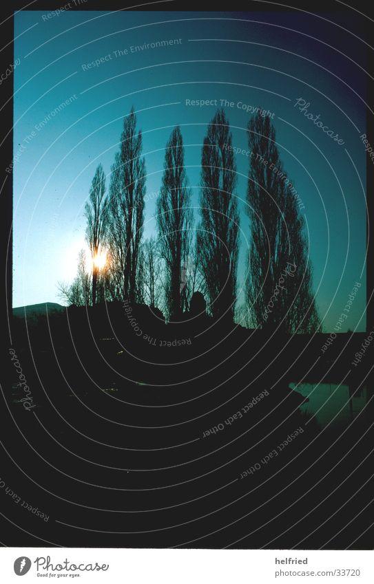 untergang Baum Sonne Wien streben himmelwärts