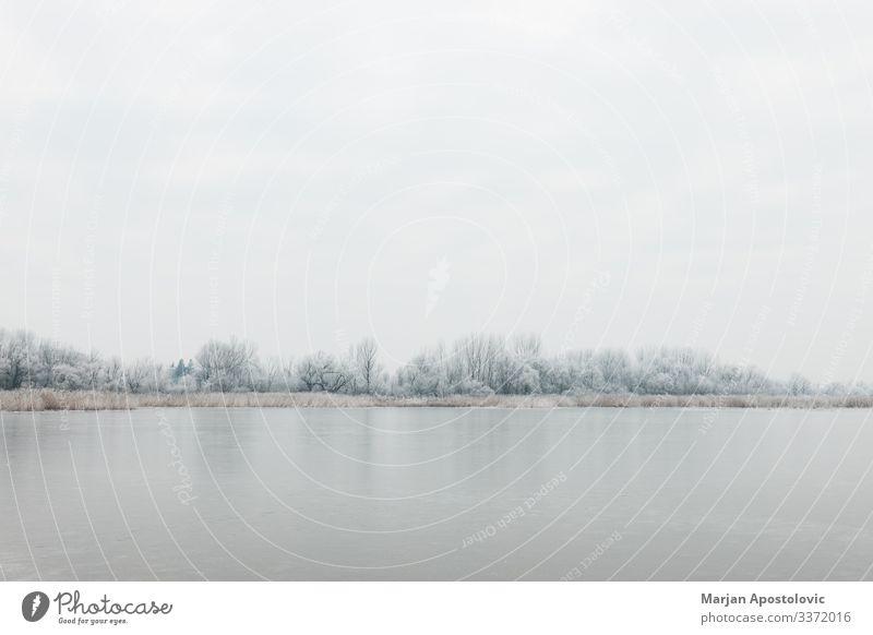 Landschaft eines zugefrorenen Sees am Wintermorgen Umwelt Natur Pflanze Wasser Himmel Klima Wetter Eis Frost Baum Flussufer Teich kalt natürlich wild Stimmung