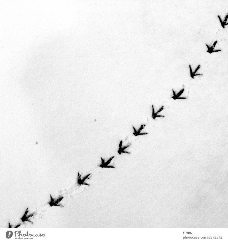Heimweg | Eiszeit Winter Schnee Vogel Fährte Fußspur Eindruck Abdruck Krallen Kurve Kurvenlage hell nass verrückt Bewegung Entschlossenheit Inspiration