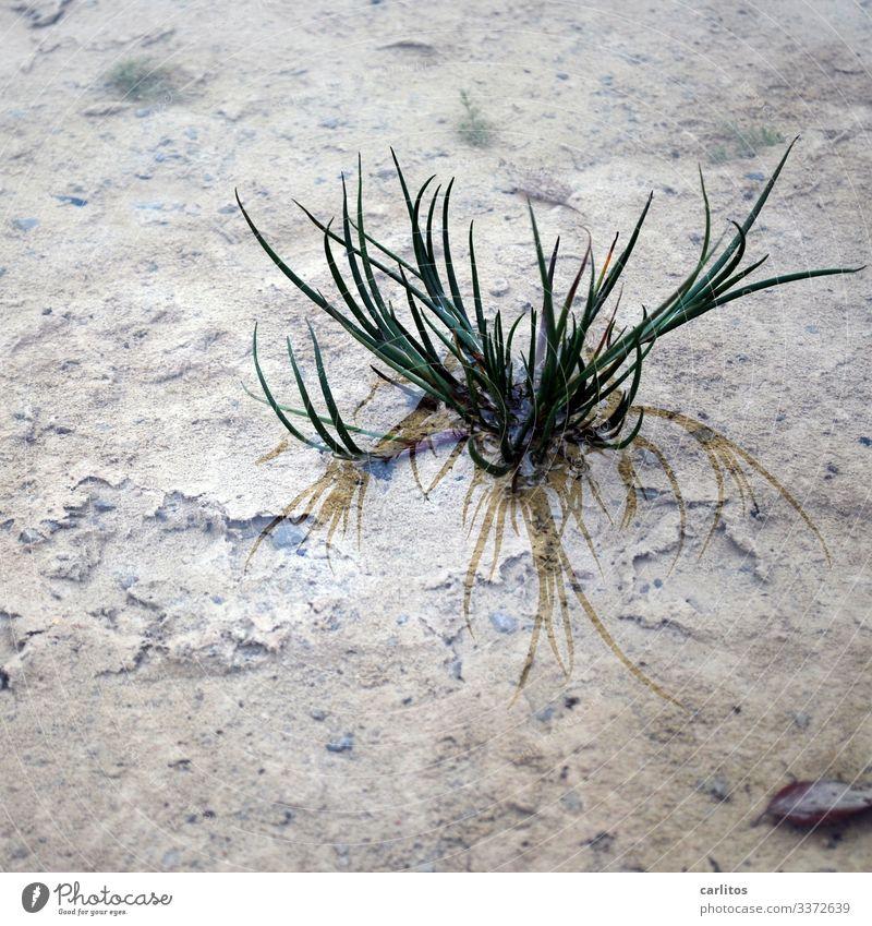 Der Natur steht das Wasser bis zum Hals Pfütze Regen Gras Büschel Spiegelung grün braun grau Depression depressiv Herbst Reflexion & Spiegelung nass