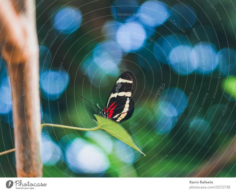 Schmetterling im Zauberland Umwelt Natur Tier Schönes Wetter Pflanze Baum Blatt Wildpflanze exotisch Urwald Wildtier 1 Erholung außergewöhnlich blau grün rot