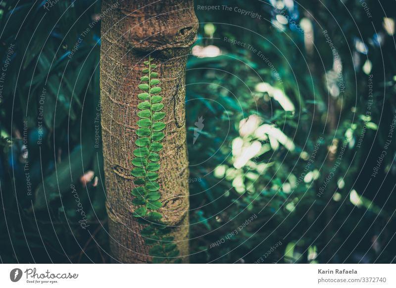Anhänglich Umwelt Natur Pflanze Frühling Baum Farn Blatt Grünpflanze exotisch Urwald außergewöhnlich authentisch Gesundheit braun grün Idylle einzigartig Kraft