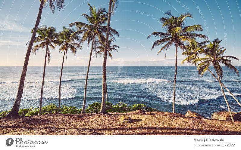 Tropischer Strand mit Kokosnusspalmen bei Sonnenaufgang. exotisch Ferien & Urlaub & Reisen Tourismus Ausflug Abenteuer Freiheit Sommer Sommerurlaub Sonnenbad