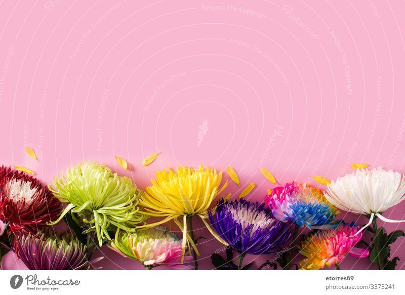 Vielfalt an farbenfrohen Frühlingsblumen arome sortiert schön Beautyfotografie Blume Überstrahlung Blüte Blumenstrauß hell Farbe mehrfarbig Gänseblümchen Tag